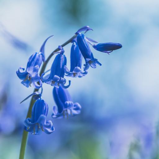 鲜花 花朵 低垂 铃兰