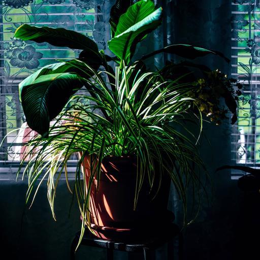 盆栽 绿植 绿叶 室内