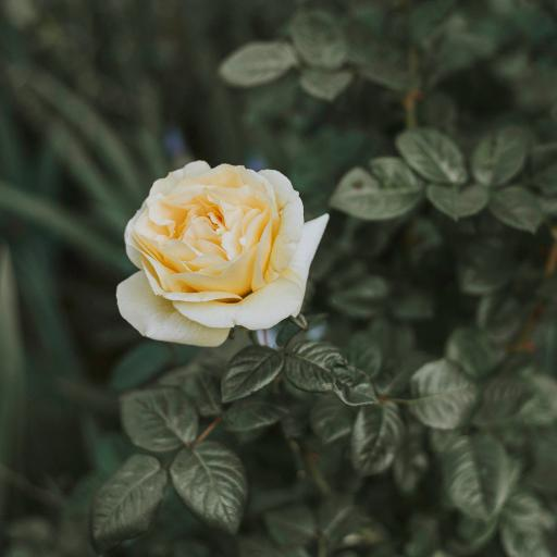枝叶 鲜花 盛开 娇滴