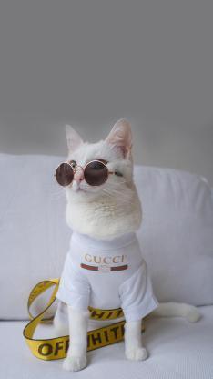 猫咪 时尚 萌 宠物 喵星人 品牌 墨镜
