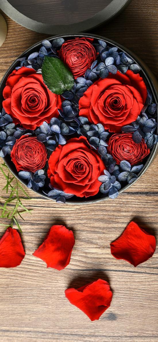 花盒 玫瑰 鲜花 盛开 花瓣