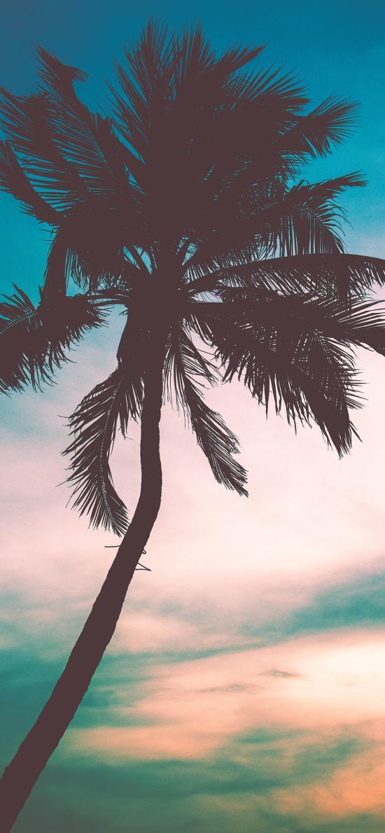 椰树 夕阳 树木 云彩