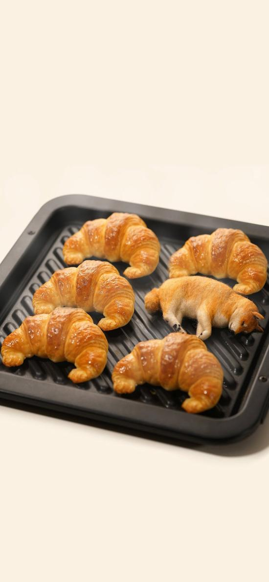 牛角包 面包 柴犬 狗狗 排列 烤盘