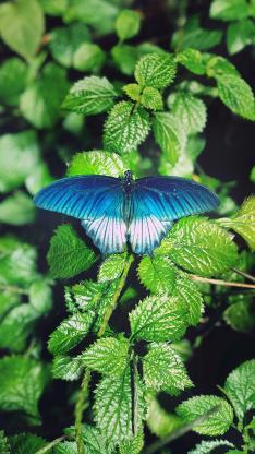 蝴蝶 翅膀 昆虫 叶子 绿色