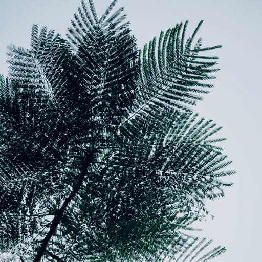 树桠 绿叶 散叶 装饰
