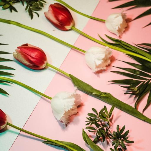 鲜花 郁金香 花朵 枝叶