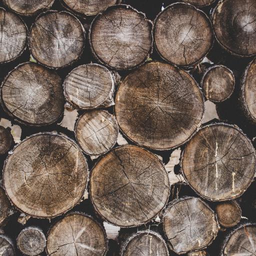 树桩 砍伐 密集 平铺