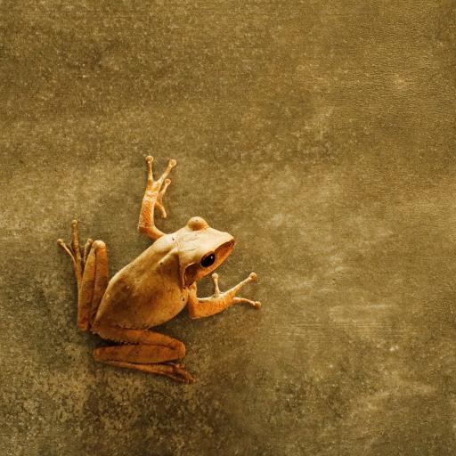 青蛙 两栖 墙