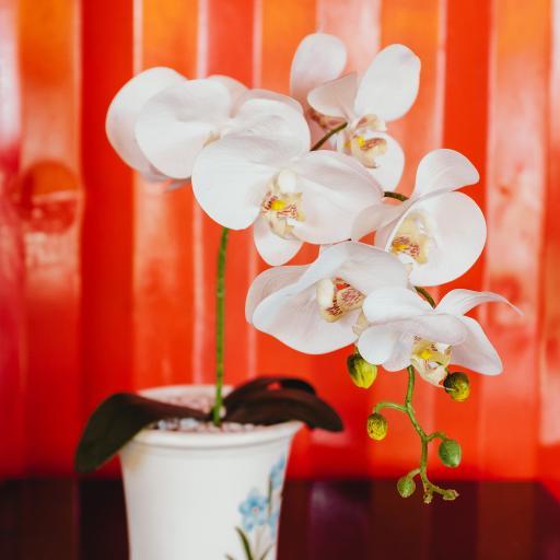 鲜花 盆栽 花瓣 盛开