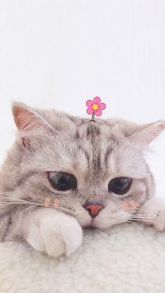 宠物猫 猫咪 可爱 小花花