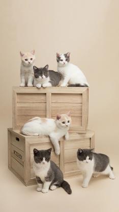 喵星人 猫咪 群 宠物 可爱
