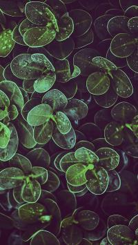 绿植 绿化 枝叶 绿色