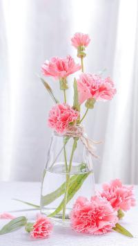 康乃馨 鲜花 花瓶 玻璃瓶 花卉