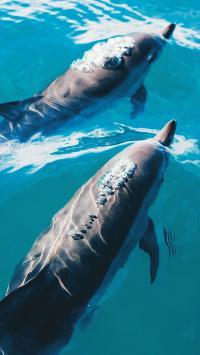 海豚 海洋生物 游动 蓝色 海水