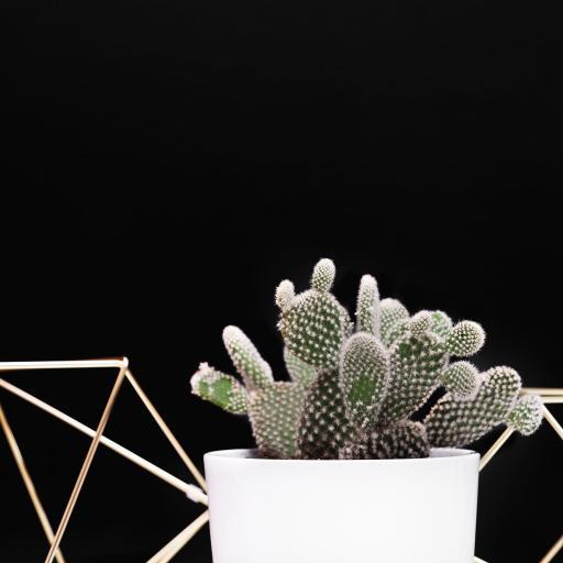 盆栽 仙人掌 花瓶 框架
