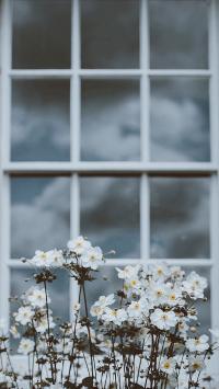 鲜花 窗户 野花 小白花