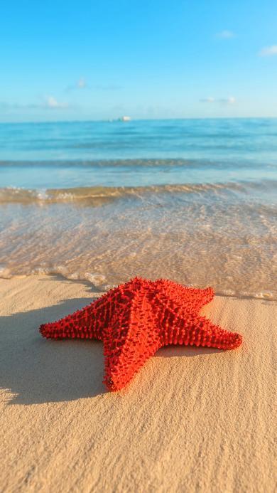 海星 沙滩 海岸 阳光 大海