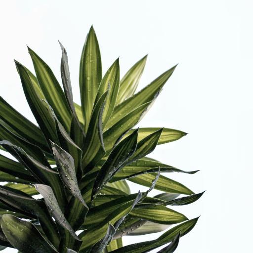 枝叶 露珠 水珠 绿植