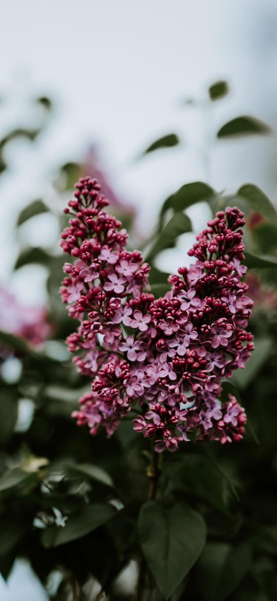 花簇 小花 花苞 绿植