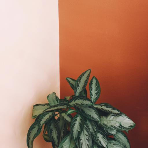 绿植 绿叶 盆栽 枝叶