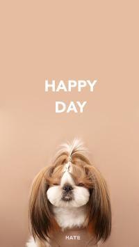 纯色背景 宠物狗 西施犬 HAPPY DAY