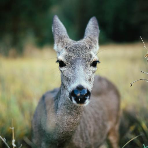 鹿 草地 跪趴 大眼