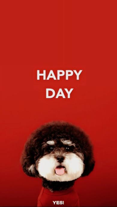 纯色背景 宠物狗 狗狗  HAPPY DAY