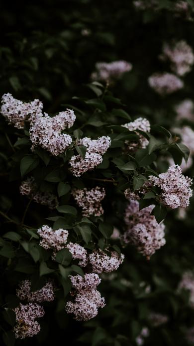 鲜花 粉色 小花朵 绽放 密集