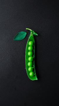 青豆 豆子 青绿 食材