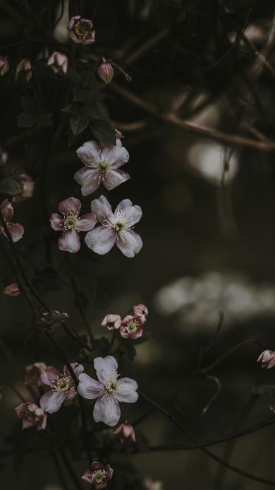 鲜花 粉色 清新 绽放