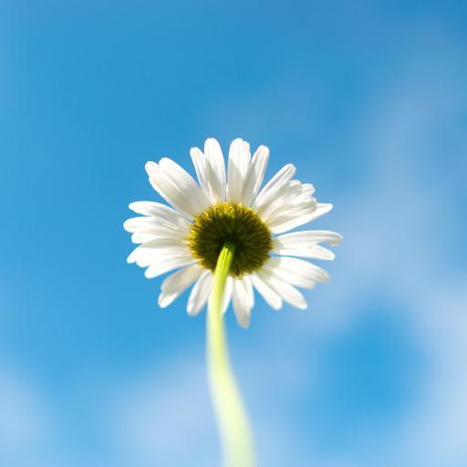 雏菊 小花 鲜花 盛开