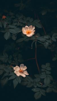 鲜花 鲜花 盛开 枝叶