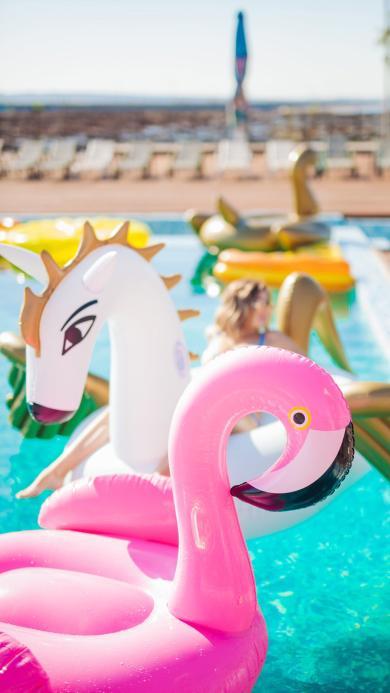 泳圈 泳池 火烈鸟 夏日 色彩