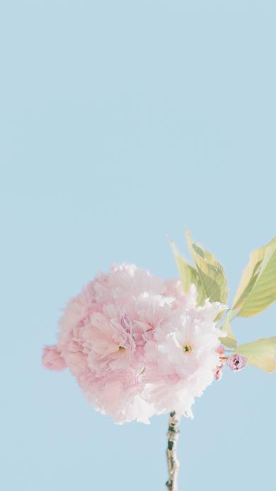 鲜花 花朵 花瓣 盛开 枝叶