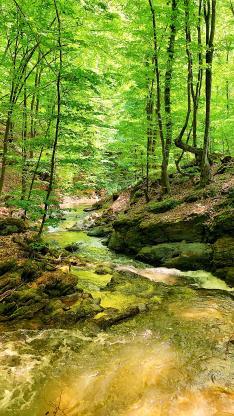 山明水秀 春意盎然 碧绿 溪水 树林