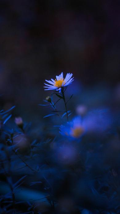 郊外 鲜花 小雏菊 迷你