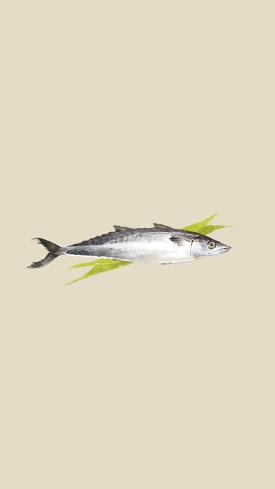 鲅鱼 插画 绘画