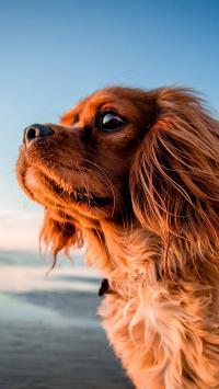 狗 海边 汪星人 犬 汪星人 宠物