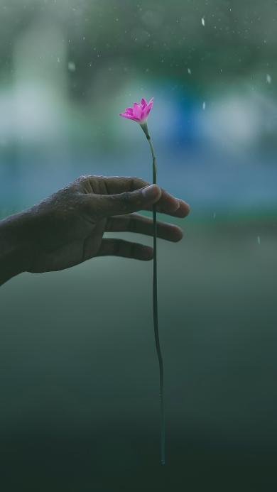 野花 迷你 粉色 雨水