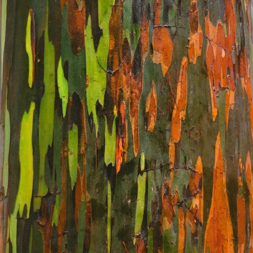 树木 树干 树皮 色彩