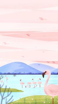 火烈鸟 插画 湖水 唯美