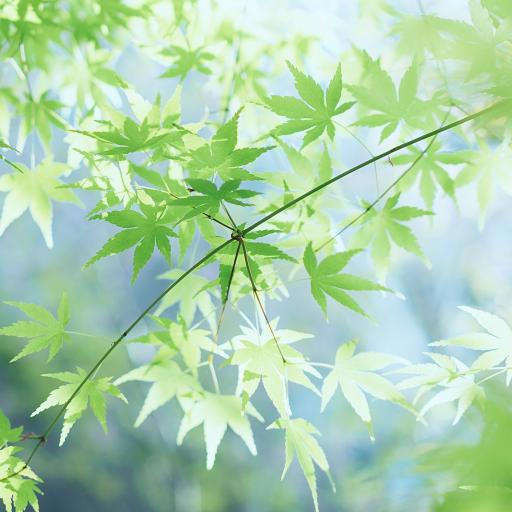 枝叶 绿色 小清新 叶子 春意