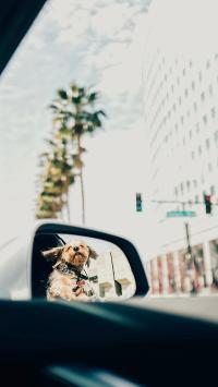 汽车 前视镜 狗子 宠物狗