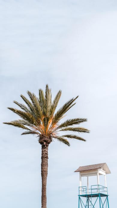 树木 棕榈树 拔高 小亭子