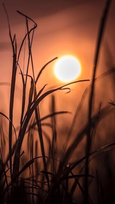 草丛 太阳 照射 唯美