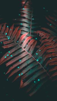 绿植 斑点 蕨类 滤镜