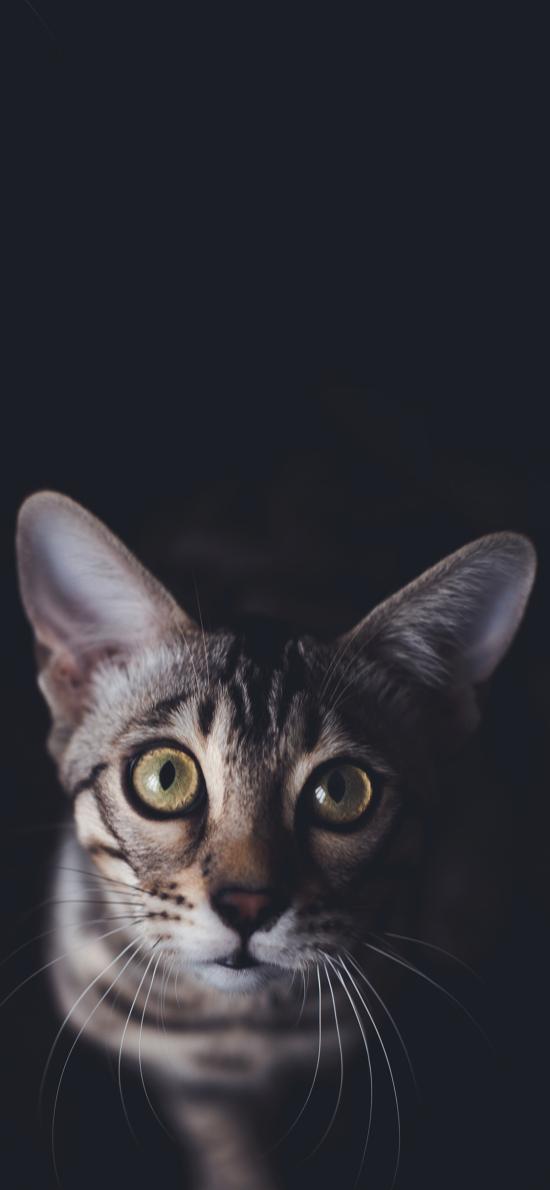 宠物 猫咪 喵星人 大眼睛