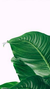 绿植 大叶 枝叶 观赏性植物