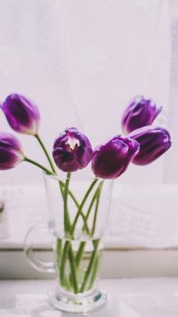 郁金香 鲜花 玻璃瓶 花瓶