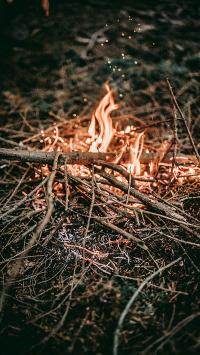 野外 户外 树枝 干柴烈火 燃烧